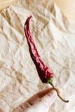 chili suszący pieprz Obrazy Stock