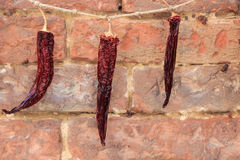 Chili to dry on a rope Stock Photography