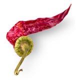 chili torkad varm pepparred Royaltyfria Bilder