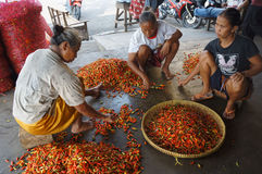 Chili. Traders sort the chili in a market in the town of Solo, Central Java, Indonesia Stock Image
