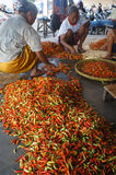 Chili. Traders sort the chili in a market in the town of Solo, Central Java, Indonesia stock photography