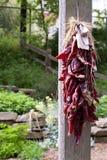 Chili wiszący pieprze Obraz Stock