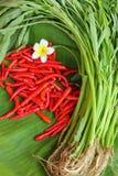 Chilien och grönsakerna Arkivbild