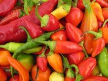 Chilien pepprar den fulla ramen för paprika Royaltyfria Bilder