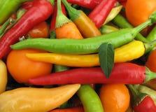 Chilien pepprar den fulla ramen för paprika Arkivfoton