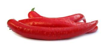 Chilien pepprar röd paprika Fotografering för Bildbyråer
