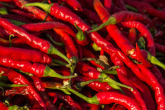chilies красные Стоковые Фото