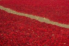 chilies сушат красный цвет Стоковая Фотография RF