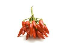 chilies Zdjęcia Royalty Free