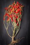 chilies Стоковое фото RF
