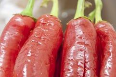 chilies Стоковые Изображения RF