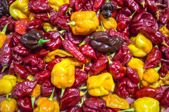 chilies Immagine Stock