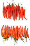 chilies rzędy świezi czerwoni Obraz Royalty Free