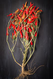 Chilies Royalty Free Stock Photo