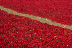 chilies torkar red Royaltyfri Fotografi
