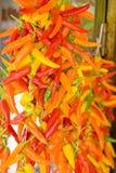 Chilifruits colorés Image libre de droits