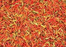 Chilipaprikor Arkivfoto