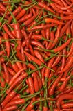 Chilipeppar Arkivfoto