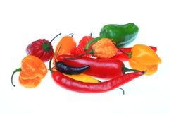 Chilipeppar, annuum paprika Arkivbilder