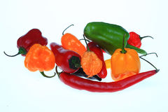 Chilipeppar, annuum paprika Royaltyfri Fotografi