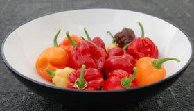 Chilipeppar bär frukt i bunke arkivfoton