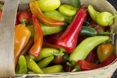 Chilipeppar i korg Royaltyfri Bild
