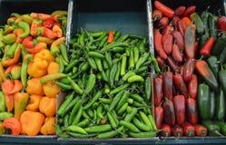 Chilipeppar på den mexikanska marknaden Royaltyfri Fotografi