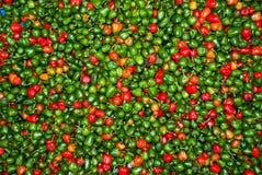 Chilipeppar på marknad, i darjeeling av Indien Royaltyfri Bild