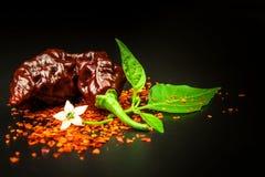 Chilipeppar på svart bakgrund Utrymme under texten Extra Bhut Jolokia för Naga för peppar för varm chili choklad Sund krydda Sale royaltyfri bild