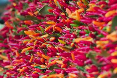 Chilis на дисплее на стойле рынка овощей стоковые фотографии rf