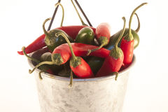 Chilis and jalapenos, in a aluminium can. Red chilis and green jalapenos, in a aluminium can. On isolated white background Royalty Free Stock Photography