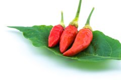 Chilis on leaves on a white background. Stock Images