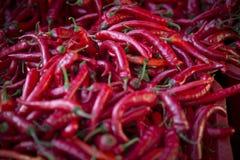 Chilis rosso asiatico sudorientale Fotografia Stock