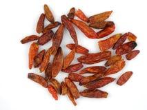Chilis secados do birdseye Imagem de Stock