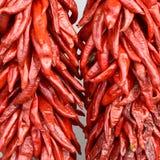 Chilis vermelhos Fotografia de Stock