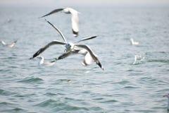 Chilka Lake,Free Sprit,Birds, Morning Bliss. I wish, I could stock photo