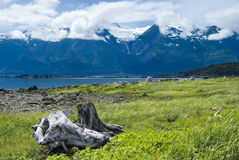 在Chilkat范围的彩虹冰川在Haines,阿拉斯加附近 免版税库存图片