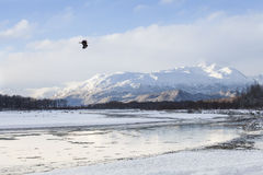 Chilkat River in Winter Royalty Free Stock Photo