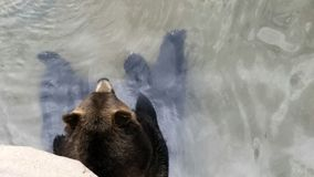 Chill медведь Стоковое фото RF
