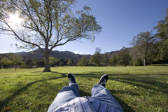 Chill out. Man relaxing under a tree Royalty Free Stock Images