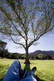 Chill out. Man relaxing under a tree Stock Photo