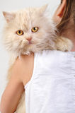 Chilld with a Persian kitten Stock Photos