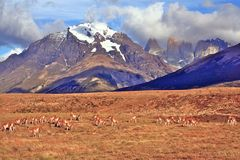 Chille Torres del Paine Stock Images