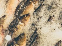 Chilled fish on ice on the counter in the market.  Royalty Free Stock Image