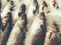 Chilled fish on ice on the counter in the market.  Royalty Free Stock Images