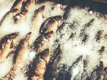 Chilled fish on ice on the counter in the market.  Stock Images