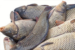 Chilled fish for sale. Stock Photos