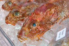 Chilled fish Stock Photography
