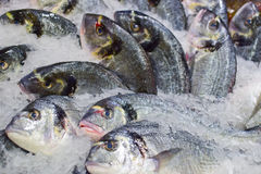 Chilled fishes Royalty Free Stock Photos