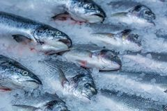 Chilled in ice red fish Stock Photo